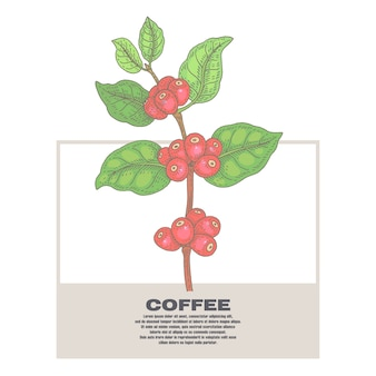 Illustration von kaffeepflanzen.