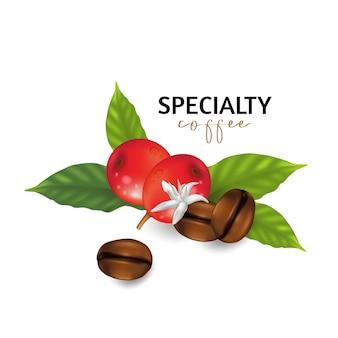 Illustration von kaffeespezialitäten, zweige des kaffeebaums mit blättern und beeren
