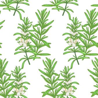 Illustration von rosmarin. nahtloses muster. blumen von heilpflanzen auf einem weißen hintergrund.