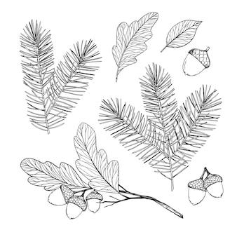 Illustration. wald herbst - winter kollektion. fichtenzweige, eicheln, herbstblätter.