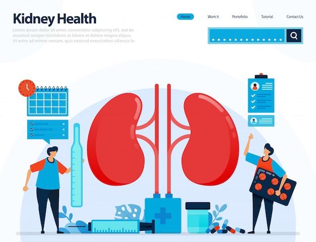 Illustration zur überprüfung der nierengesundheit. krankheiten und störungen der niere.