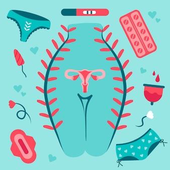 Illustrationen des weiblichen fortpflanzungssystems