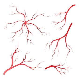 Illustrationsdesignvorlage für menschliche venen und arterien