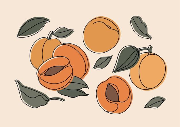 Illustrationssatz von aprikosen isoliert