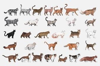 Illustrationszeichnungsart der Katze züchtet Sammlung