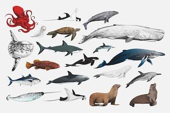 Illustrationszeichnungsart der Marinelebenssammlung