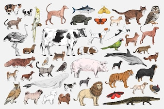 Illustrationszeichnungsart der Tiersammlung