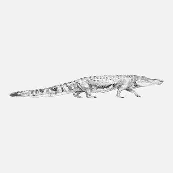 Illustrationszeichnungsart des alligators
