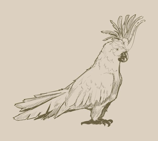 Illustrationszeichnungsart des papageien