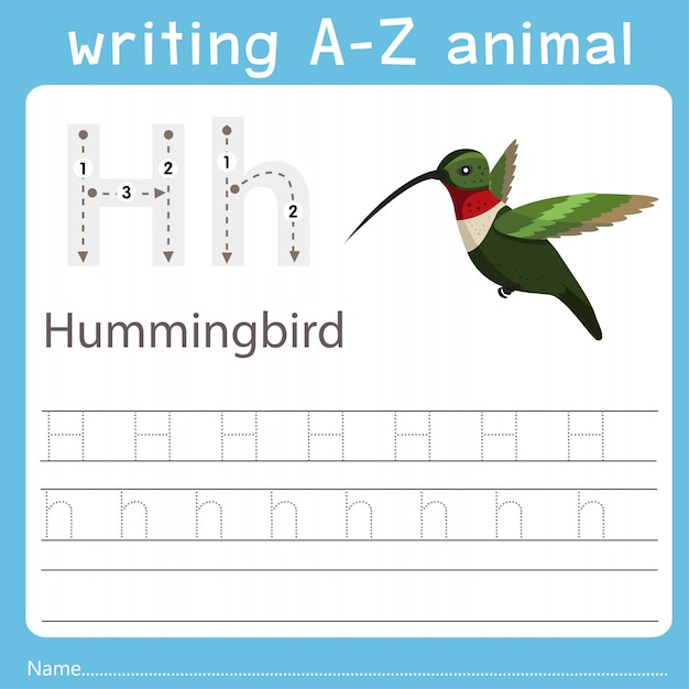 Illustrator, der ein az-tier des kolibris schreibt