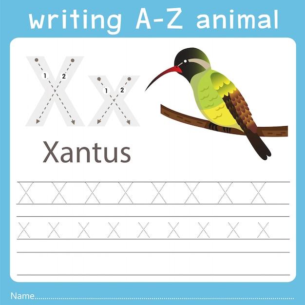 Illustrator, der ein tier von xantus schreibt