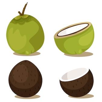 Illustrator der kokosnussfrucht