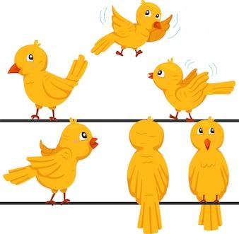 Illustrator der lustigen Karikatur der Vögel