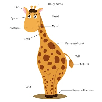Illustrator des giraffenkörperteils
