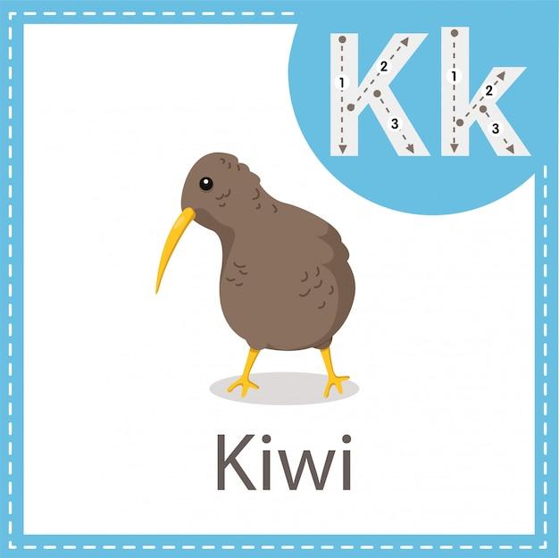 Illustrator des kiwivogels