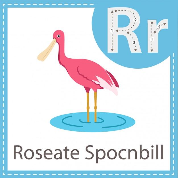 Illustrator des vogels roseate spocnbill