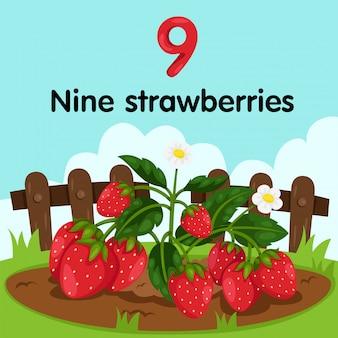 Illustrator von erdbeeren der nummer neun