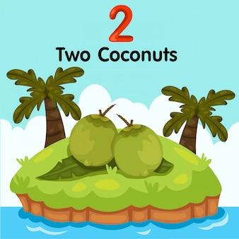 Illustrator von nummer zwei kokosnüssen