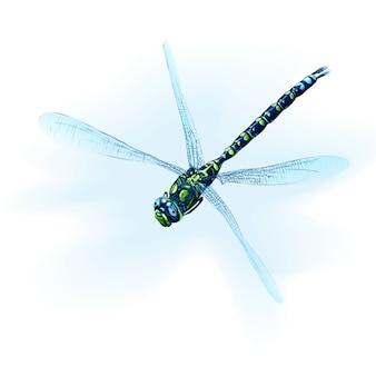 Illustrierte farbige schönheitsflügel traurige libelle