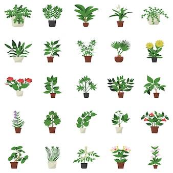 Immergrüne zimmerpflanze flache symbole