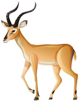 Impala tier auf weißem hintergrund