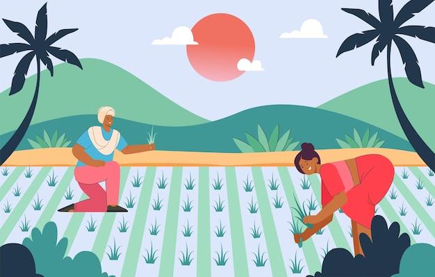 Indische karikaturbauern, die getreide in reisfeldern ernten