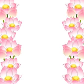 Indische lotus grenze