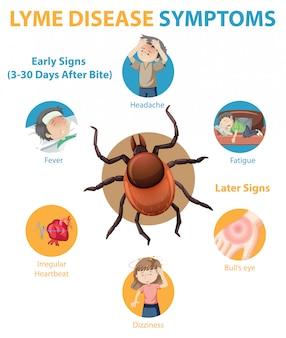 Infografik informationen zu symptomen der lyme-borreliose