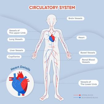 Infografik mit flachem kreislaufsystem