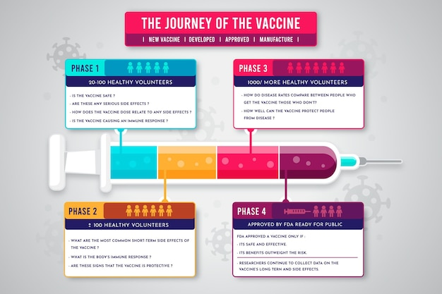 Infografik mit flachen coronavirus-impfphasen