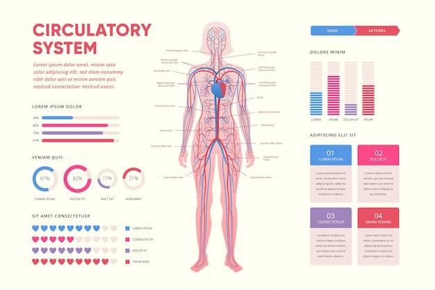 Infografik mit gradientenkreislauf