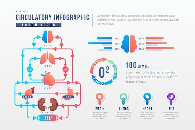 Infografik-vorlage für das gradient-kreislaufsystem