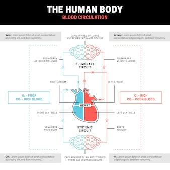 Infografik-vorlage für das lineare kreislaufsystem