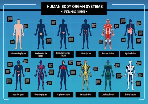 Infografiken des menschlichen körpers