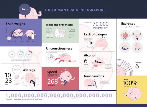 Infographic satz des menschlichen gehirns, karikaturvektor lokalisierte die bilder, die mit statistischen tatsachen und diagrammen begleitet wurden