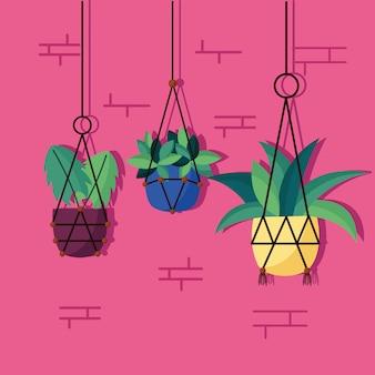 Innenarchitektur der dekorativen zimmerpflanzen