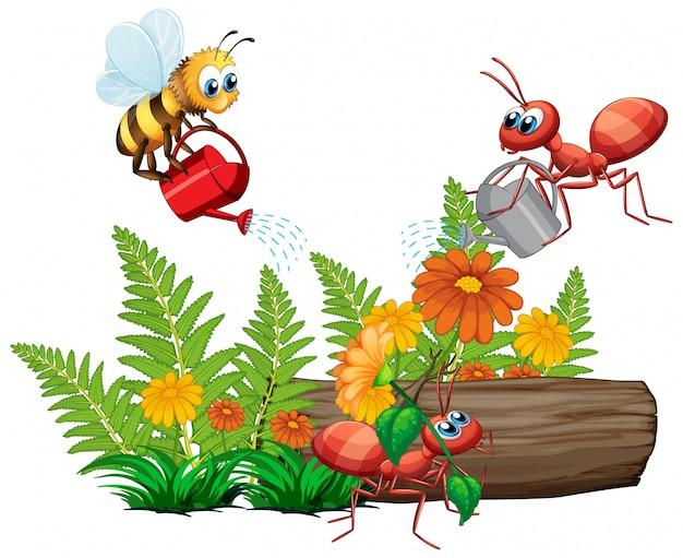 Insekten, die die pflanze auf weißem hintergrund gießen