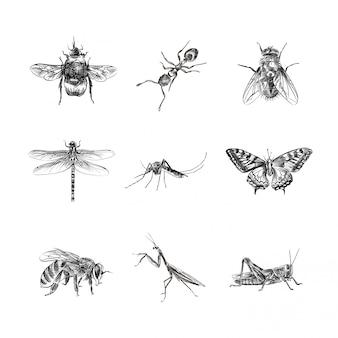 Insekten handgezeichnete skizze, illustration
