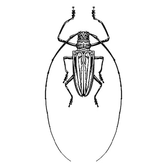 Insektenkäfer isoliert. schwarzweiss-skizze.