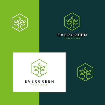 Inspirierende immergrüne logos, bäume, blätter und blumen mit stilvollen konturen