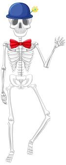 Isolierte anatomie des menschlichen skeletts