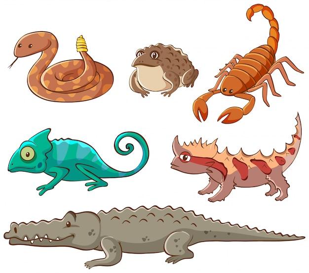Isolierte bild von giftigen tieren