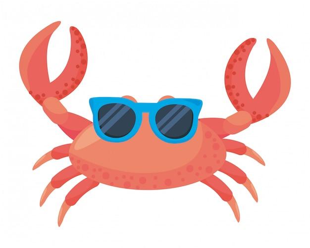 Isolierte krabben cartoon