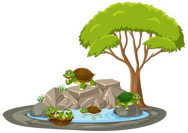Isolierte szene mit vielen schildkröten rund um den teich