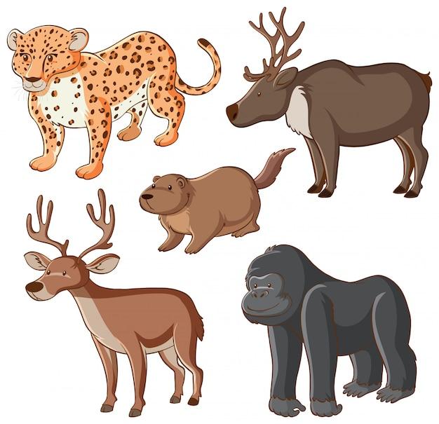 Isolierte wilde tiere