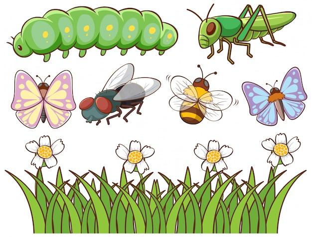 Isoliertes bild verschiedener insekten