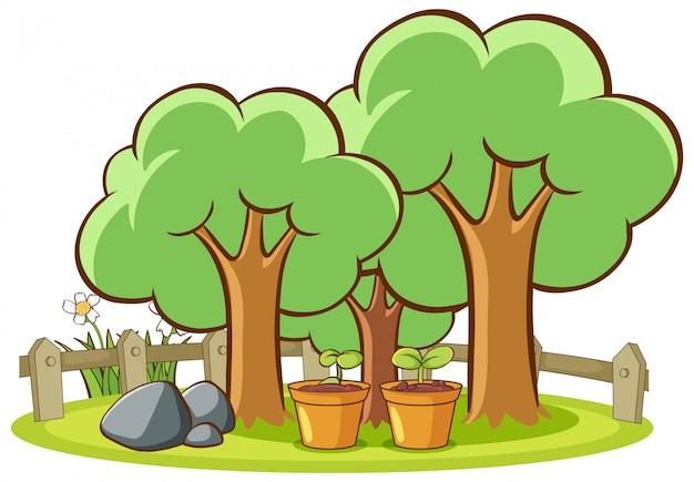 Isoliertes bild von bäumen im park