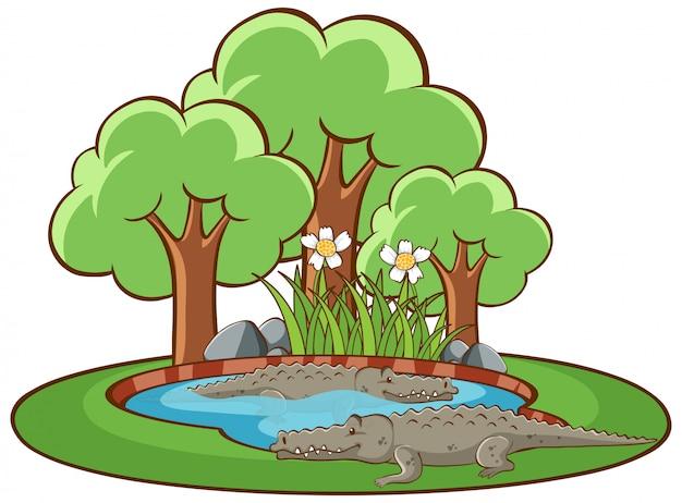 Isoliertes bild von krokodilen im park Kostenlosen Vektoren