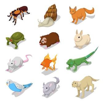 Isometrische haustiere haustiere mit katze, hund, hamster und kaninchen. flache illustration des vektors 3d