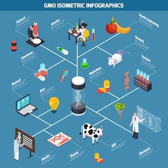 Isometrische infografiken von gvo